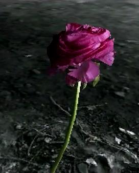 the-black-lotus